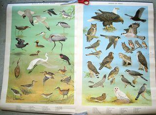 Bird_posters