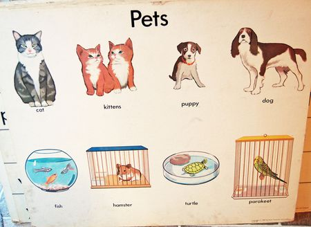 Posters-pets